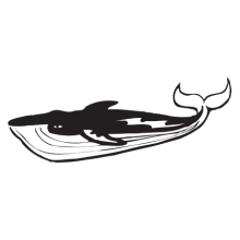 realistic whale wall decal