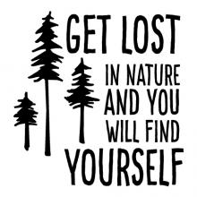 Get lost in nature and find yourself, pine, travel, trees,
