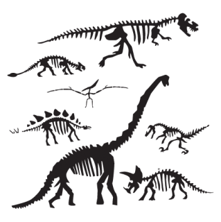 Dinosaur Fossil Collection Wall Quotes Wall Art Decal